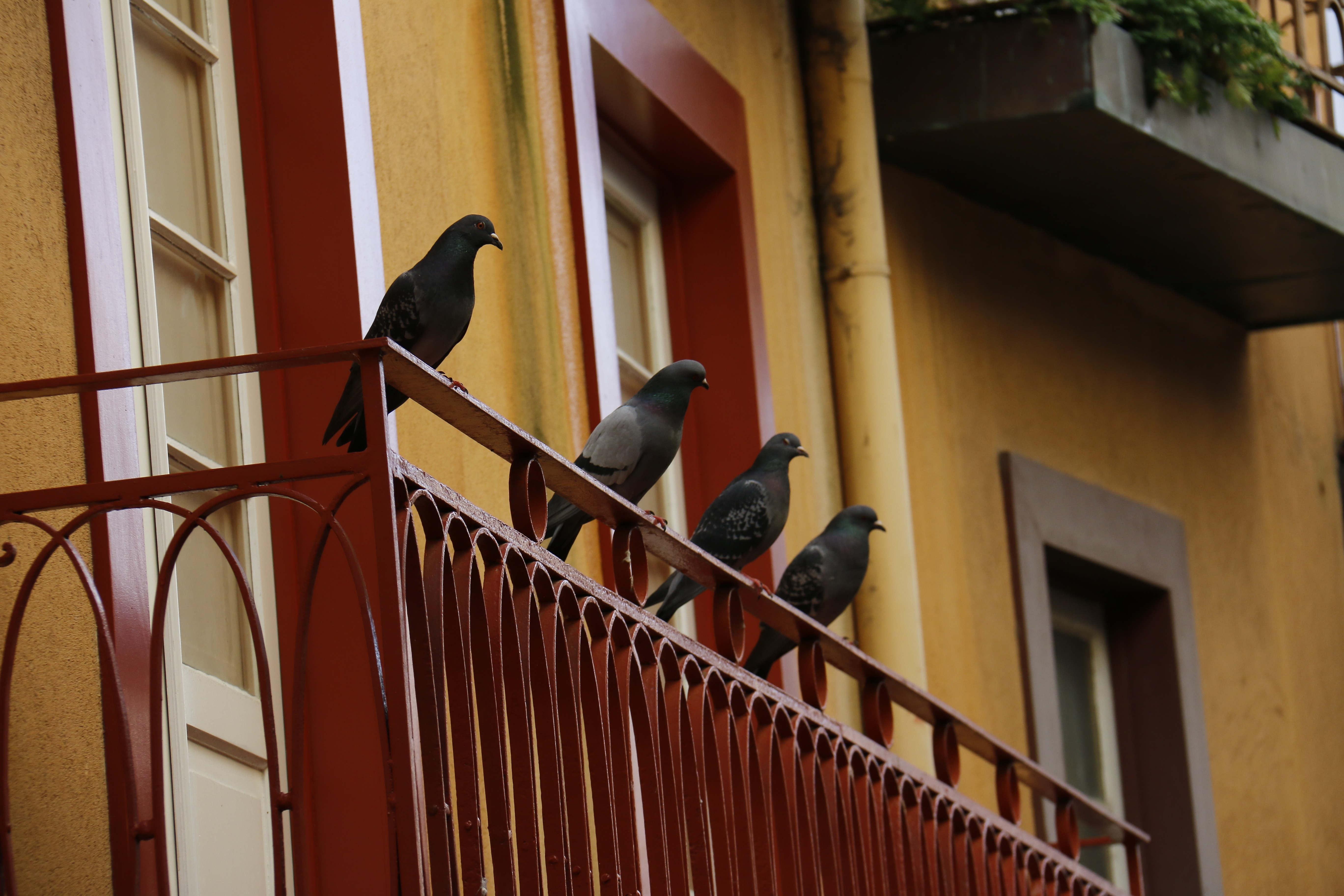 architecture-wood-window-old-wall-balcony-facade-handrail-pigeon-stairs-classic-baluster-outdoor-structure-665635.jpg